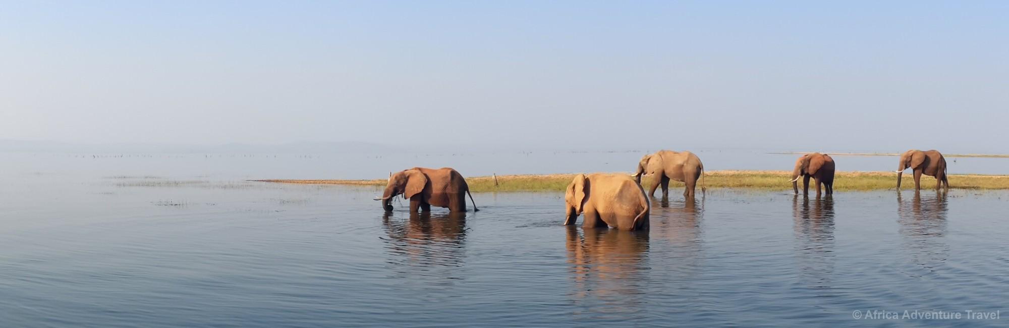 lake-kariba-elephant.jpg